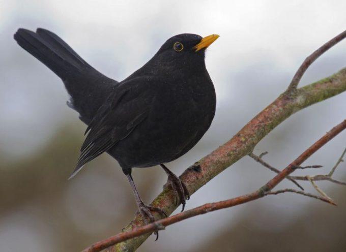 Chi abita in campagna si è accorto che all'alba, o anche un'ora prima, c'è un gran cinguettio di uccelli: