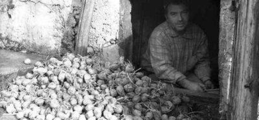 lavori di fine inverno: la semina delle patate.