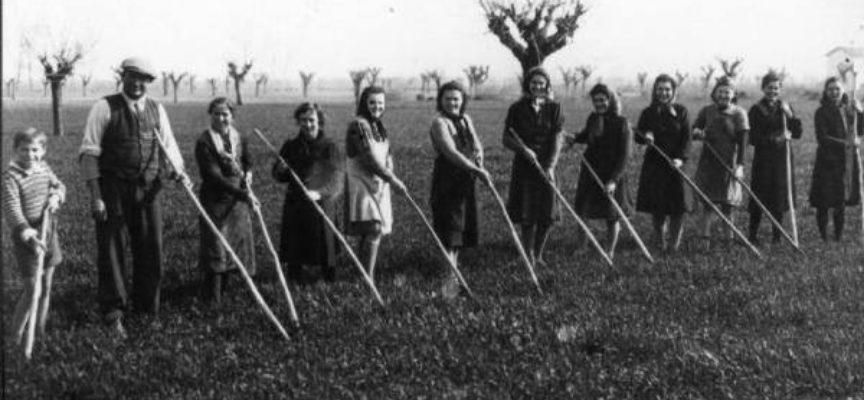 La sarchiatura del grano… come usava una volta