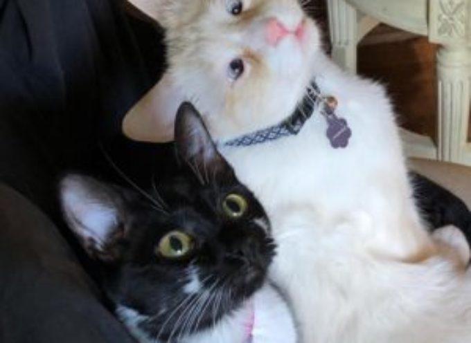 Una Donna adotta un gatto e torna al rifugio il giorno dopo per il fratello cieco