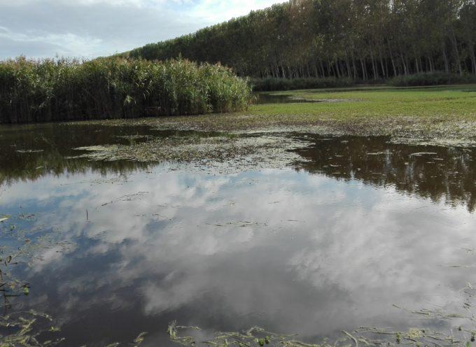 Appaltati i lavori, per complessivi 2,5 milioni di euro, dell'impianto nuovo di fitodepurazione che immetterà direttamente nel lago di Massaciuccoli 150 litri al secondo di acqua fitodepurata