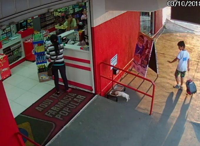 Il ragazzo porta in farmacia un cane abbandonato che offre cibo agli animali di strada
