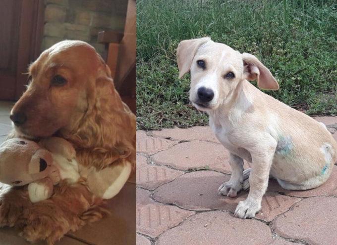 Vi racconto la storia di Gemma, il cucciolo sbranato a due mesi da un pastore tedesco
