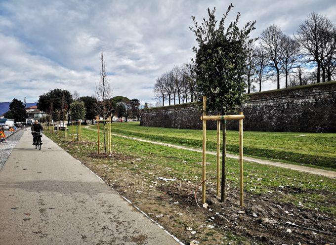 fuori Porta Santa Maria. Piantati 15 nuovi alberi.