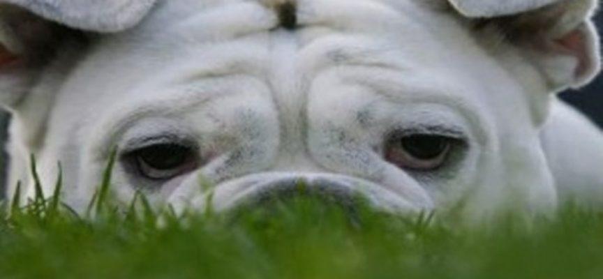 8 consigli per rallegrare gli animali domestici depressi