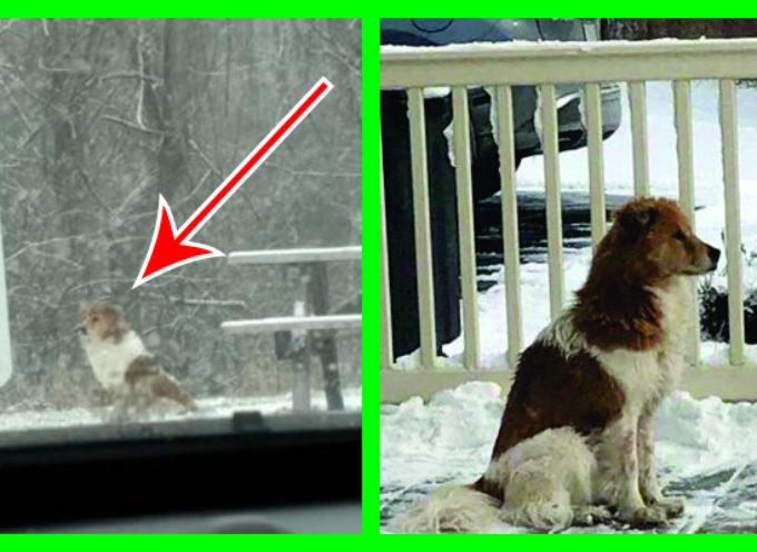 Cane abbandonato rimane immobile al freddo in attesa del suo proprietario che non farà mai ritorno