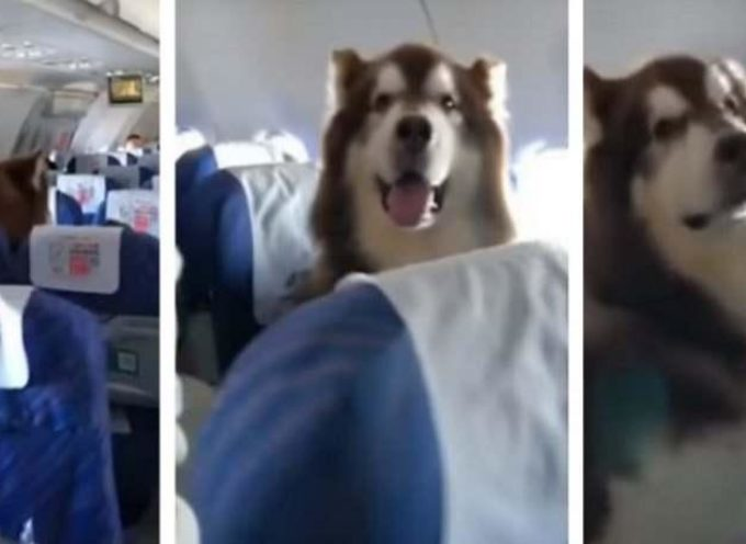 A questo cane è stato permesso di volare accanto al suo padrone disabile (VIDEO)