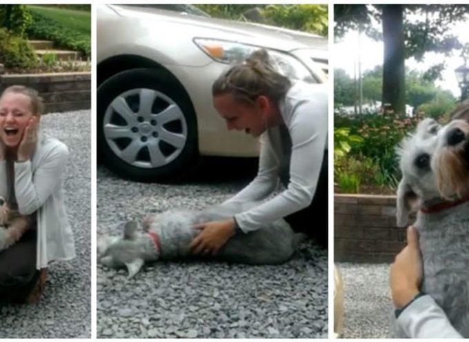 Un cane si ricongiunge con il suo proprietario dopo anni ed è così emozionato che sviene