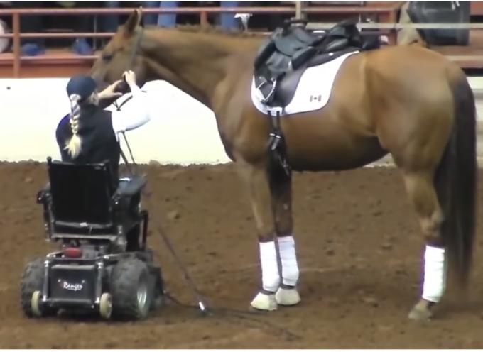Cavallo si avvicina alla donna in sedia a rotelle – Momenti dopo, l'intera folla cade in silenzio