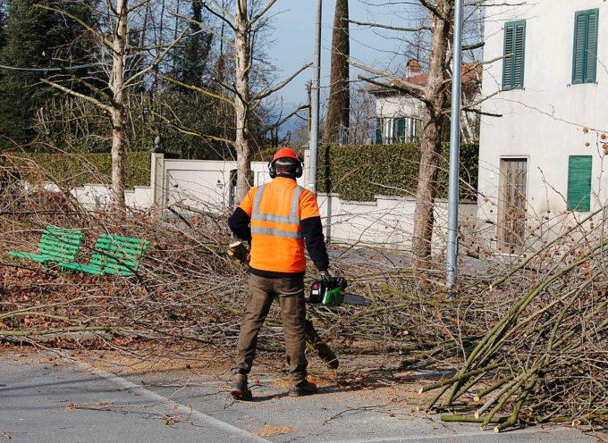 CAPANNORI – Le ditte che effettueranno a titolo gratuito il taglio degli alberi comunali avranno la disponibilità del legname per la trasformazione