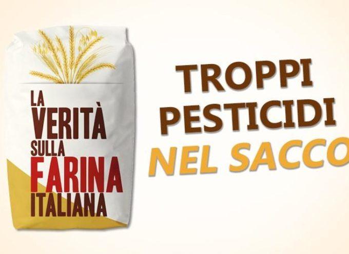 Farine al glifosato: i marchi migliori e quelli con più residui di pesticidi