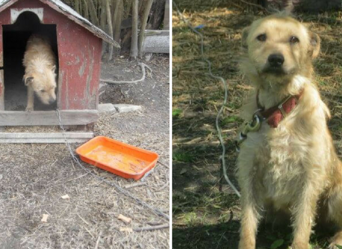 """Incatenato fuori per 5 anni, l'unica parola che questo cane conosceva era """"No"""""""