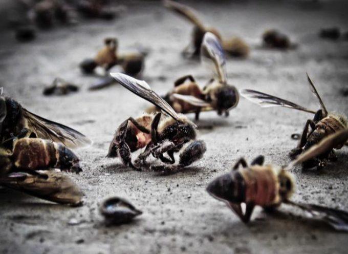 Insetti, rischiano l'estinzione entro fine secolo per colpa dei pesticidi
