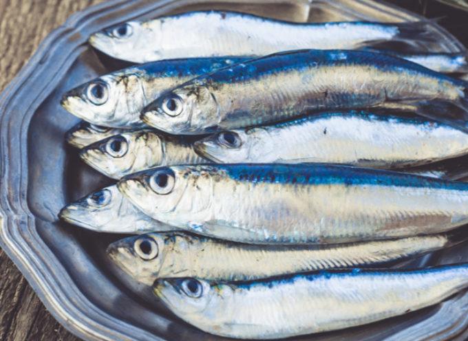 Pesca, caratteristiche e proprietà del Pesce Azzurro