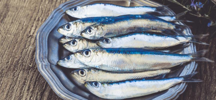Pesca Caratteristiche E Proprietà Del Pesce Azzurro Verde Azzurro
