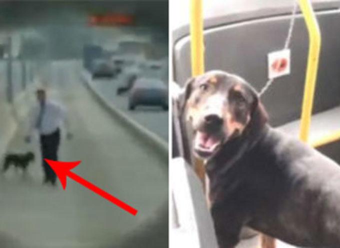 Un'autista ferma il suo autobus nel bel mezzo del traffico per salvare un cane