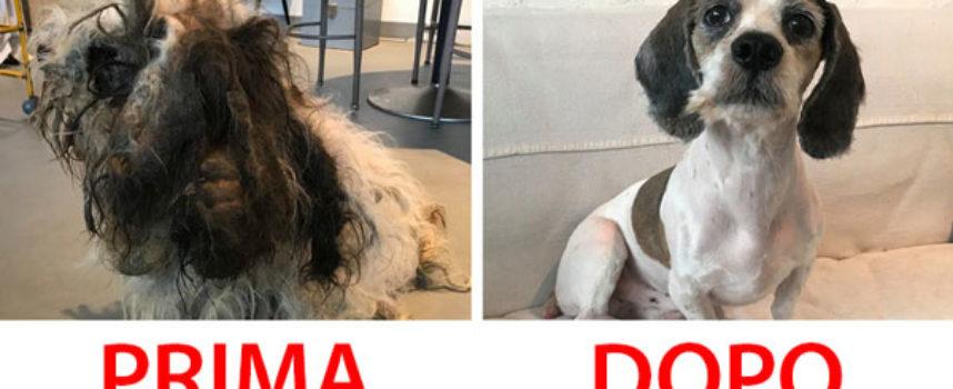 15 Animali abbandonati che sono cambiati drasticamente dopo essere stati adottati