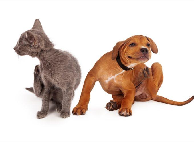 Come scegliere la migliore prevenzione per pulci e zecche per i vostri animali domestici