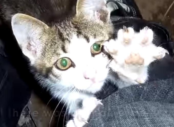 Porta gattino abbandonato in una casa piena di cani, la loro reazione è tutta da vedere
