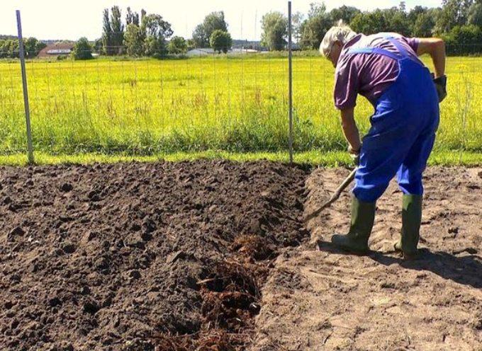 Come vangare il terreno per l'orto