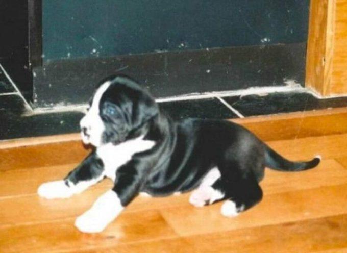 Sua moglie adotta questo piccolo cane contro la sua volontà, ma poi scopre l'inganno