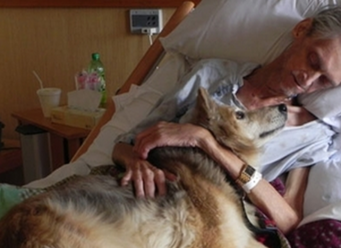 Il desiderio finale dell'uomo morente di vedere di nuovo il suo cane è il momento in cui le persone non dimenticheranno mai