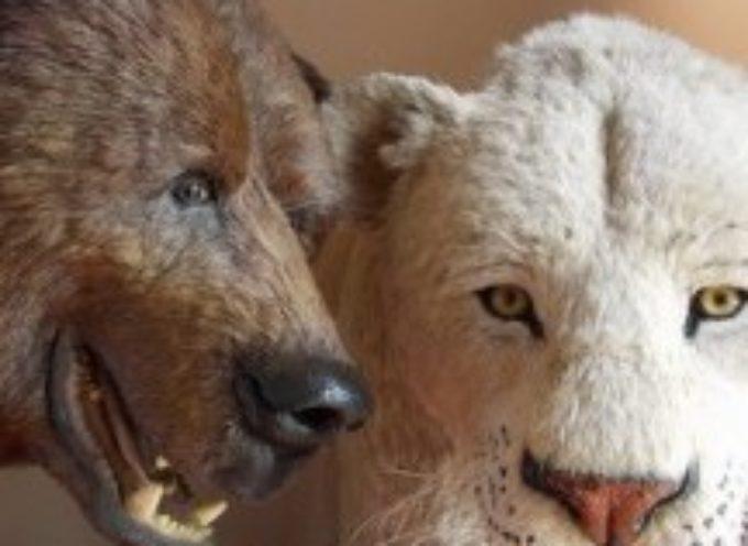 Museo della Fauna di Ieri e di Oggi, A CAREGGINE
