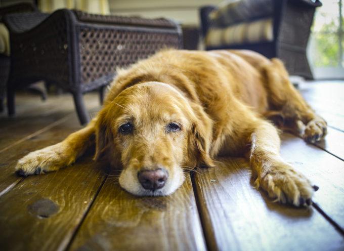 Vita media di un cane: quanti anni puo' vivere?