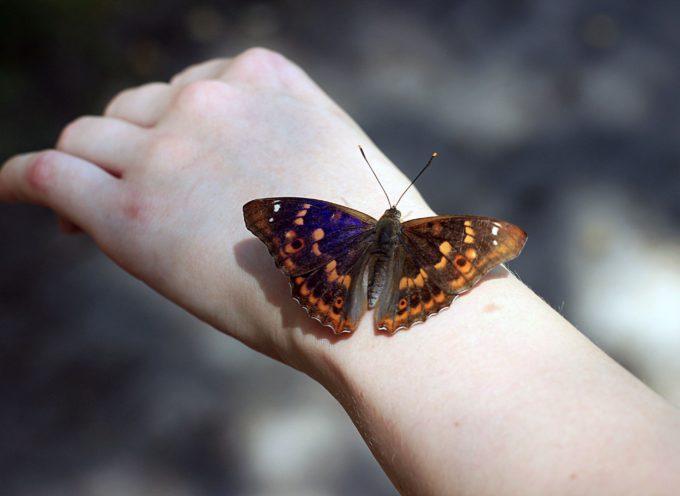 Gli insetti potrebbero scomparire in 100 anni…! Vi rendete conto di cosa stiamo combinando a questo nostro pianeta?