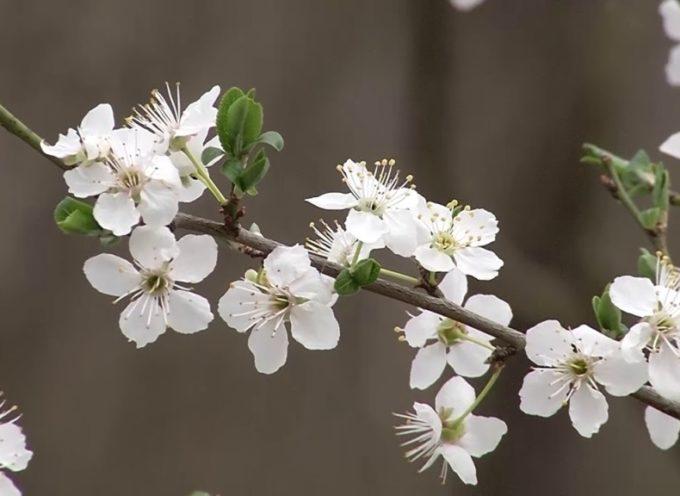 21 marzo, è primavera; una piantina nel giardino