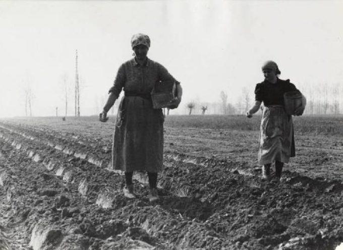 I campi sono pronti, la terra arata, passata con l'erpice per frangere le zolle: