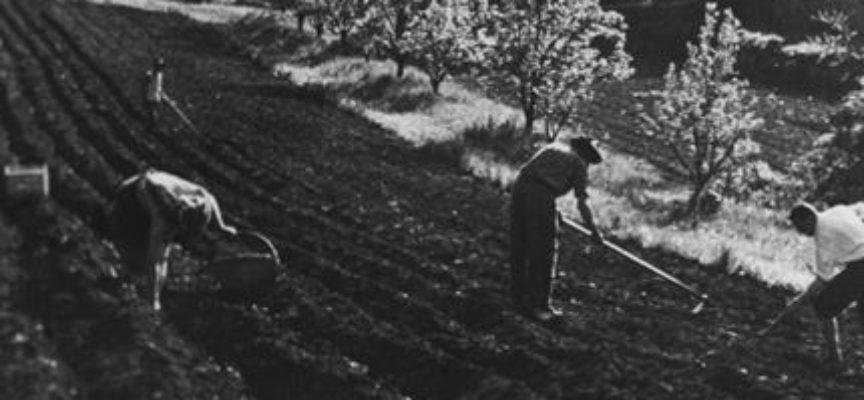 lavori di Marzo: la semina delle patate.