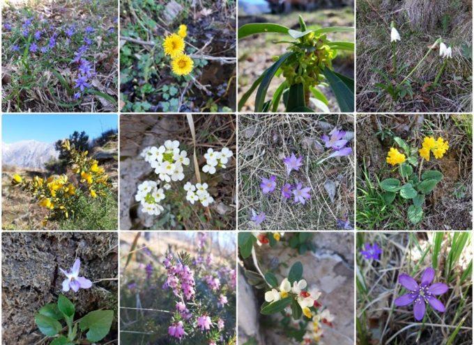 il calendario di aperture dell'Orto Botanico per la stagione 2019