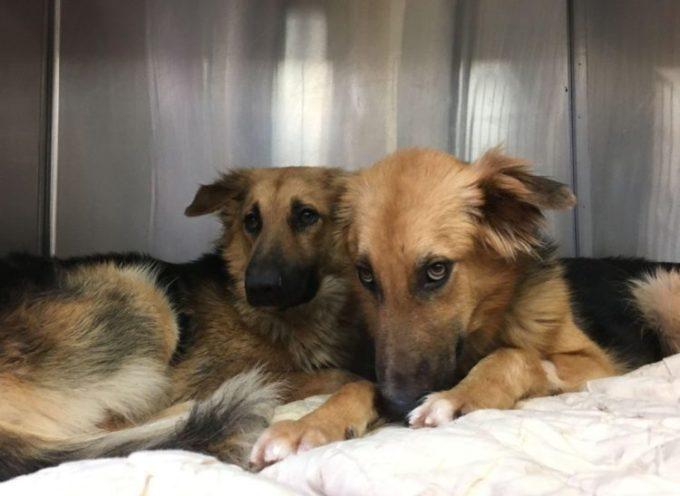 Cani terrorizzati abbandonati non smettono di abbracciarsi, il loro destino potrebbe essere la morte certa
