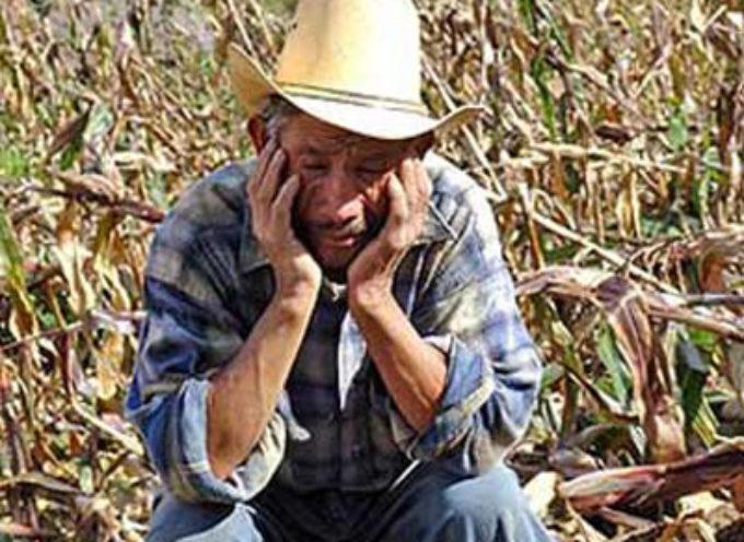 Disoccupazione agricola. Spetta anche al titolare di partita Iva