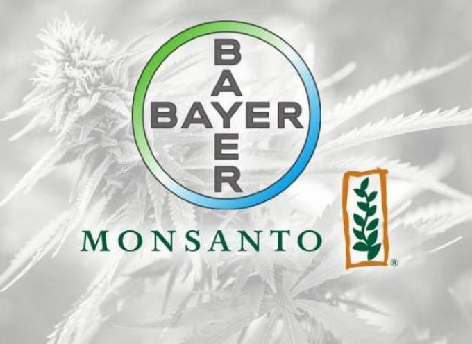 Monsanto e Bayer stanno cercando di conquistare il monopolio dell'industria della cannabis