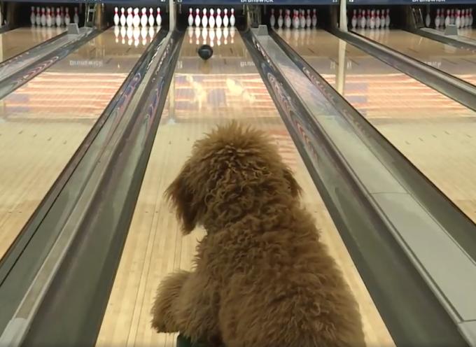 Ragazza gli insegna a tirare al bowling, oggi è la star del locale