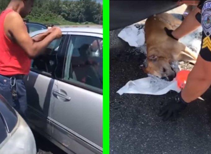 Cane perde la vita dopo essere stato lasciato in macchina per 7 ore