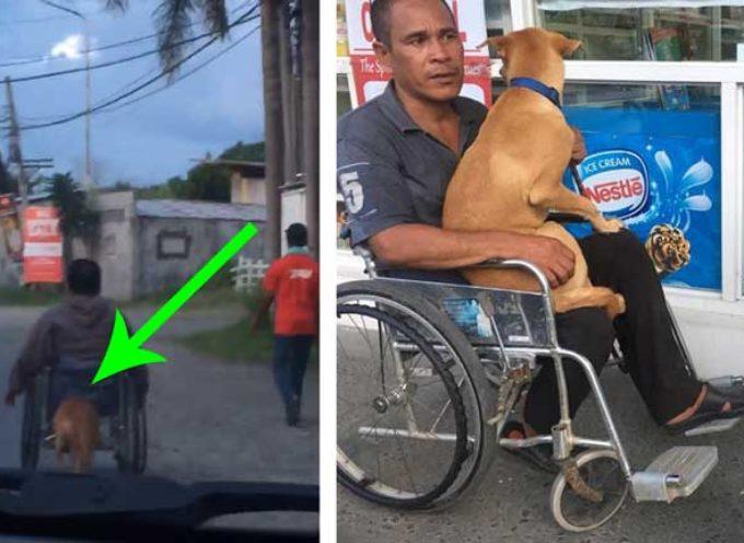 Ama il suo proprietario disabile così tanto che lo aiuta ogni giorno spingendo la sua sedia a rotelle