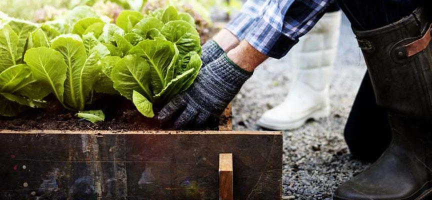 ortaggi, tuberi e frutti da piantare alla fine dell'inverno