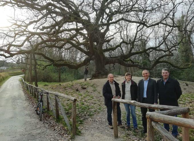 La grande quercia di Gragnano-San Martino in Colle è divenuta accessibile alle persone sulla sedia a rotelle