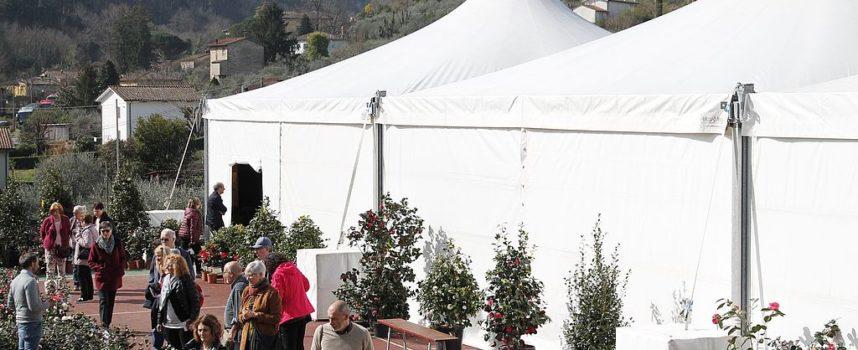 il secondo fine settimana della 'XXX Mostra Antiche Camelie della Lucchesia'. Evento clou la prima Fiera Internazionale del tè