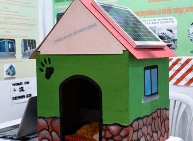 Cucce per animali randagi riscaldate ad energia solare: