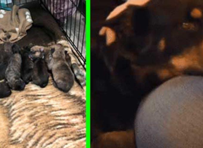 Donna segue cane abbandonato e trova dei cuccioli dentro una federa