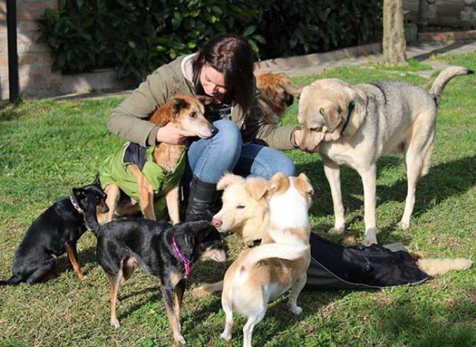 Questa volontaria adotta i cani anziani che non vuole nessuno per non farli morire in canile