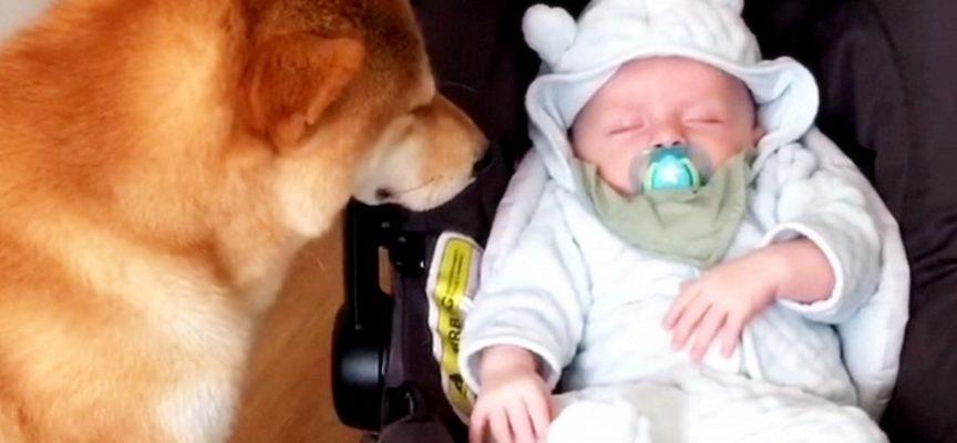 Mamma porta il neonato a casa, non sapendo quale sarebbe stata la reazione del cane