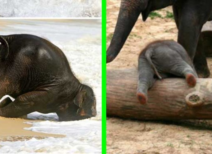 20 adorabili cuccioli di elefanti, che si comportano come dei bambini