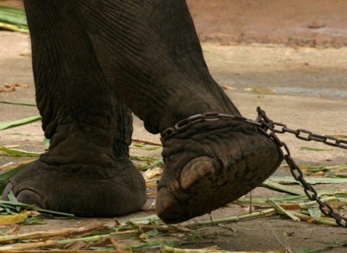 Il parlamento Portoghese approva la fine dell'uso di animali selvatici nel circo