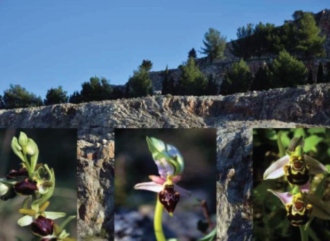 Escursione 17 marzo: Sella di Spazzavento monte Legnaio e le fioriture primaverili. Venerdì 22 marzo cena dell'equinozio bionaturale vegetariana