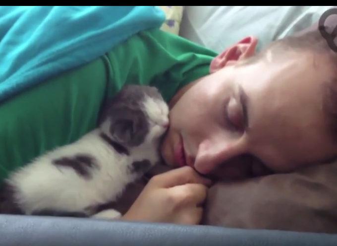 Gattino dolcissimo dorme con il suo papà umano